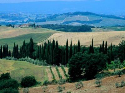 collines toscanes (2)